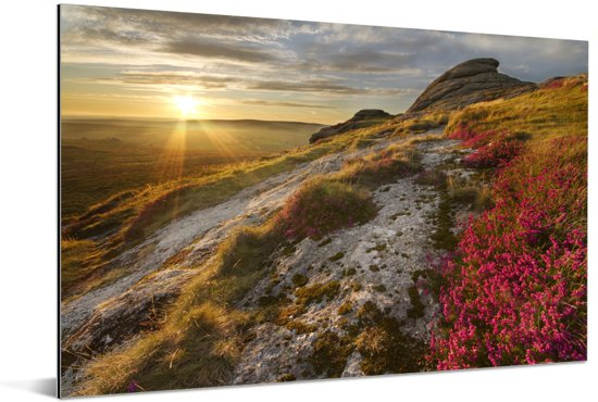 Roze bloemen op het heuvellandschap van het Nationaal park Dartmoor Aluminium 60x40 cm - Foto print op Aluminium (metaal wanddecoratie)