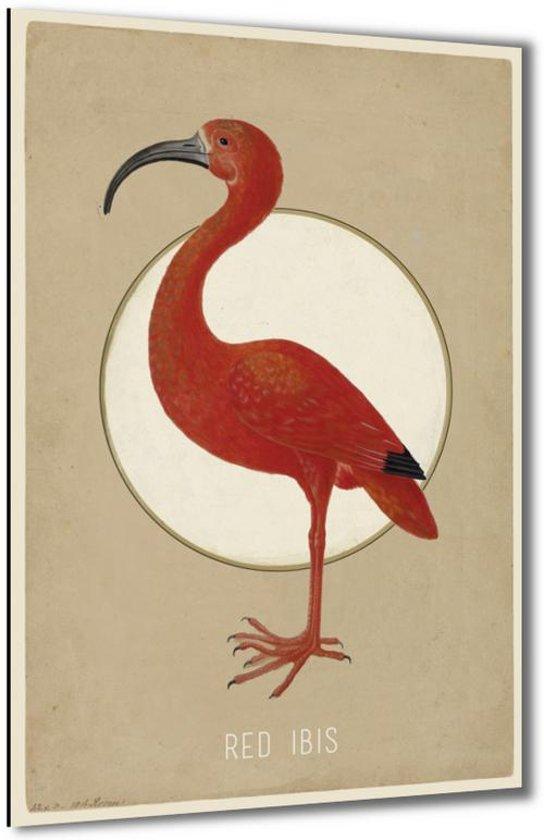Red Ibis - Rode Ibis - 40x60 cm - Anne Waltz - PixaPrint - WE-0034-1