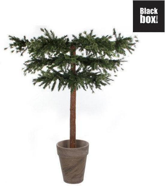 Bol Com Black Box Trees Kerstboom Paraplu Lexington Spruce