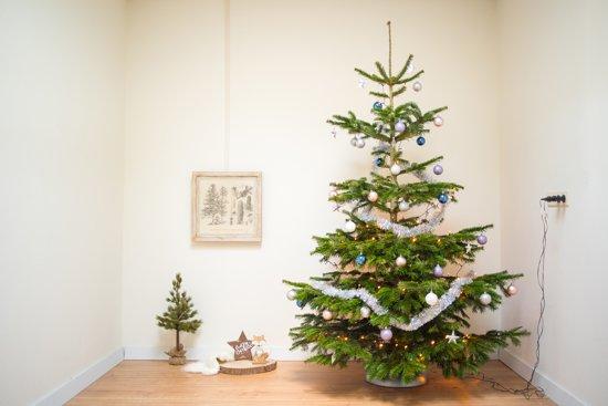 Echte Kerstboom Nordmann Spar 2 25 2 50 Meter Zonder Kluit