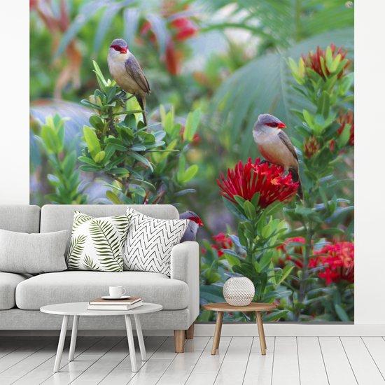 Fotobehang vinyl - Sint helenafazantjes op een bloemenstruik breedte 350 cm x hoogte 350 cm - Foto print op behang (in 7 formaten beschikbaar)