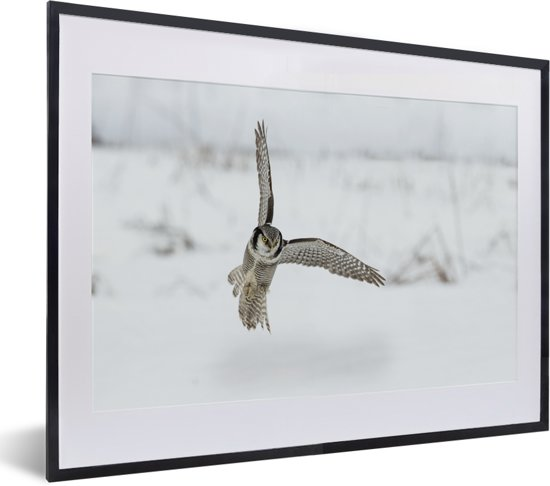 Foto in lijst - Sperweruil landt in de sneeuw fotolijst zwart met witte passe-partout klein 40x30 cm - Poster in lijst (Wanddecoratie woonkamer / slaapkamer)