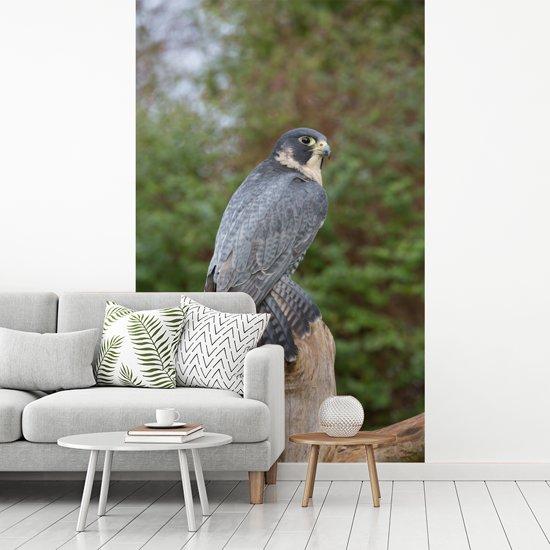 Fotobehang vinyl - Een slechtvalk kijkt uit vanaf een dode boom breedte 180 cm x hoogte 280 cm - Foto print op behang (in 7 formaten beschikbaar)