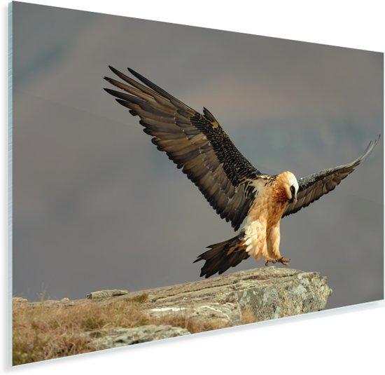 Lammergier landt op een rots Plexiglas 120x80 cm - Foto print op Glas (Plexiglas wanddecoratie)