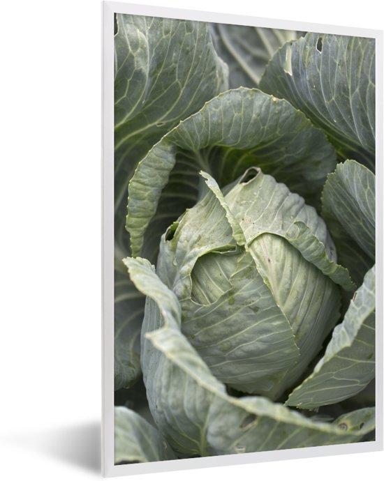 Foto in lijst - Enorme bladeren van de bekende mergkool fotolijst wit 40x60 cm - Poster in lijst (Wanddecoratie woonkamer / slaapkamer)