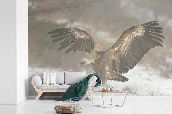Fotobehang vinyl - Vale gier strekt zijn vleugels in de sneeuw breedte 525 cm x hoogte 350 cm - Foto print op behang (in 7 formaten beschikbaar)