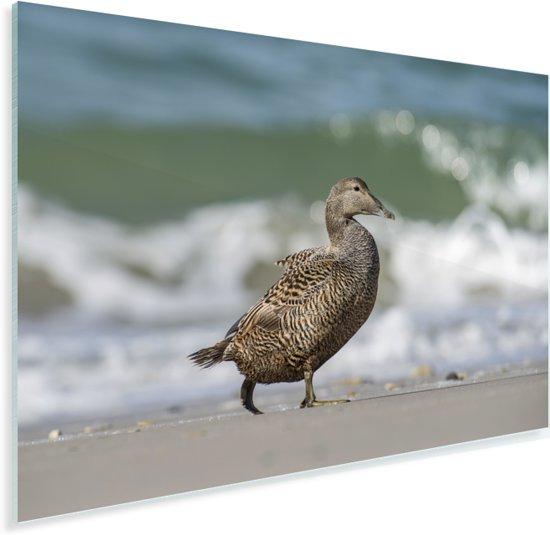 Een donkere eidereend wandelt naar het water Plexiglas 180x120 cm - Foto print op Glas (Plexiglas wanddecoratie) XXL / Groot formaat!