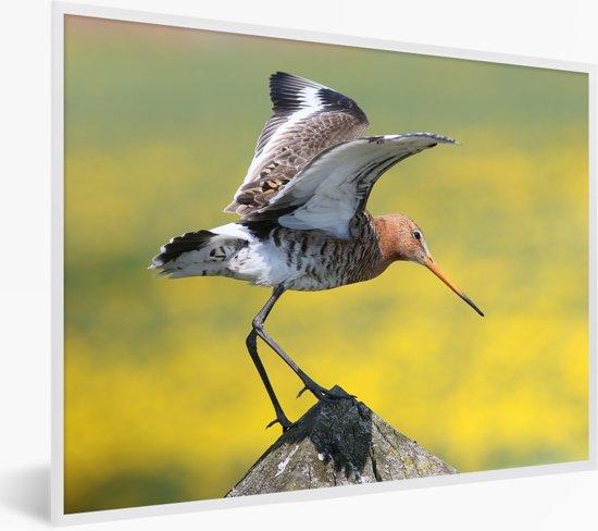 Foto in lijst - Een grutto die weg wil vliegen fotolijst wit 40x30 cm - Poster in lijst (Wanddecoratie woonkamer / slaapkamer)
