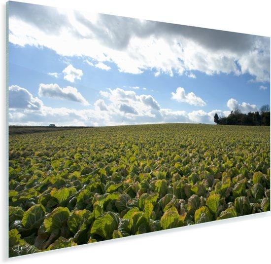 Een veld van Chinese kool met een bijzonder bewolkte lucht Plexiglas 90x60 cm - Foto print op Glas (Plexiglas wanddecoratie)