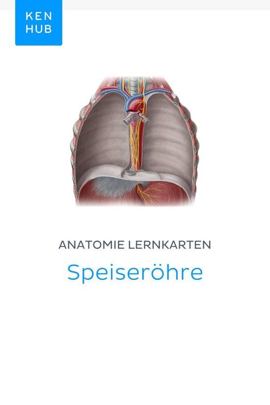 bol.com   Anatomie Lernkarten: Speiseröhre (ebook), Kenhub ...