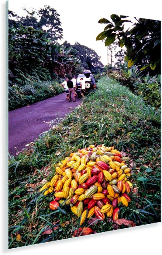 Hoopje tropische en verse cacaobonen Plexiglas 20x30 cm - klein - Foto print op Glas (Plexiglas wanddecoratie)