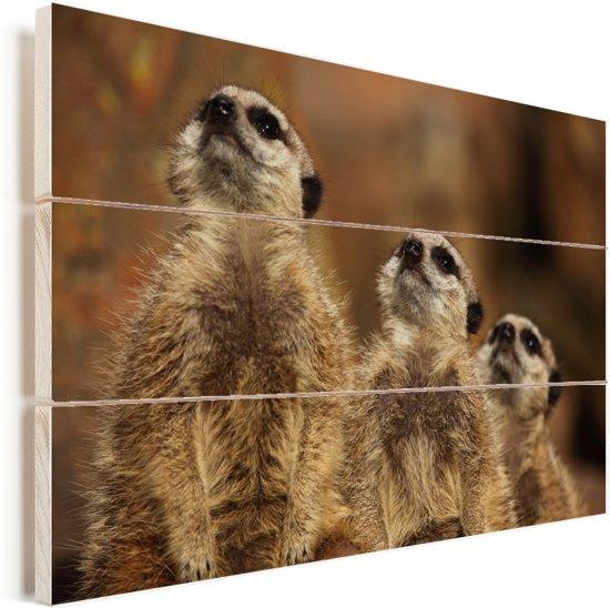 Drie Stokstaartjes kijken schuin in de zon Vurenhout met planken 90x60 cm - Foto print op Hout (Wanddecoratie)