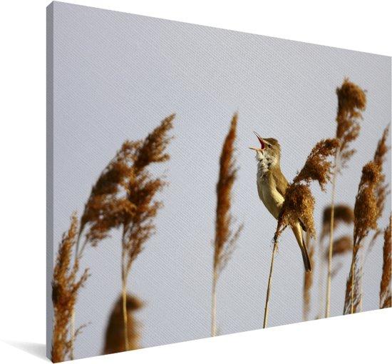 Beeld van een grote karekiet zingend in het riet Canvas 30x20 cm - klein - Foto print op Canvas schilderij (Wanddecoratie woonkamer / slaapkamer)