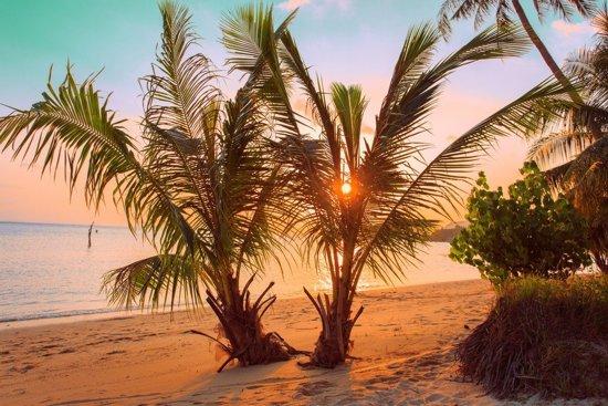 Papermoon Tropical Sunset Beach Vlies Fotobehang 250x186cm 5-Banen