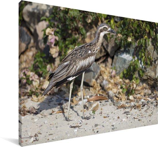 Rifgriel opzoek naar voedsel op het land Canvas 90x60 cm - Foto print op Canvas schilderij (Wanddecoratie woonkamer / slaapkamer)