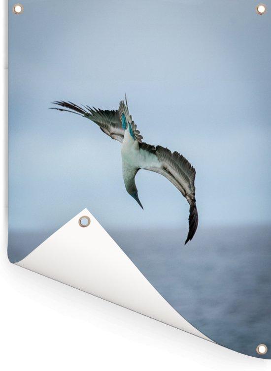 Blauw voet booby vliegt richting het water opzoek naar voedsel Tuinposter 120x160 cm - Tuindoek / Buitencanvas / Schilderijen voor buiten (tuin decoratie) XXL / Groot formaat!