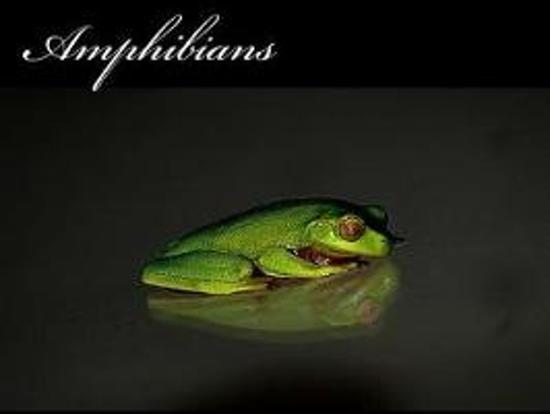 Amphibians (Journal / Notebook)