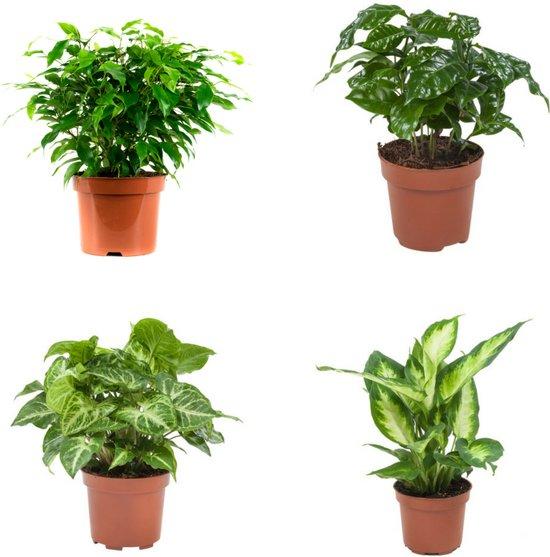 Combi pakket: hippe groene kamerplanten