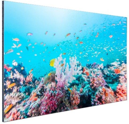 Kleurrijk rif en koraal Aluminium 120x80 cm - Foto print op Aluminium (metaal wanddecoratie)