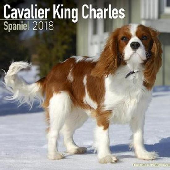 Bolcom Cavalier King Charles Spaniel Kalender 2018