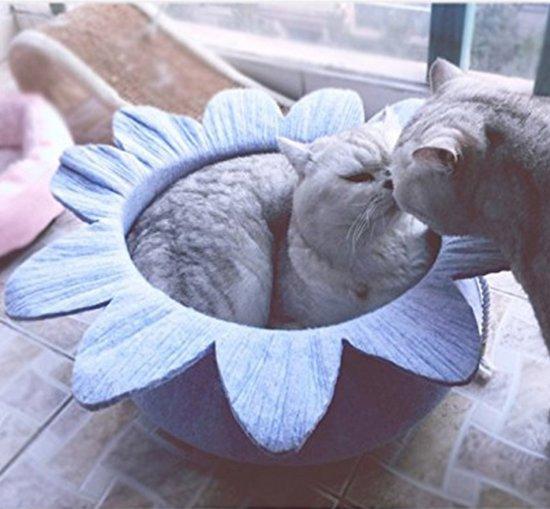 My Little Rascal - Kattenmand Bloem