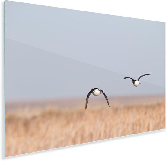 Twee brilduikers vliegend over het land Plexiglas 30x20 cm - klein - Foto print op Glas (Plexiglas wanddecoratie)