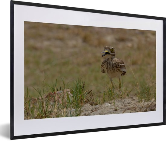 Foto in lijst - Griel in droog gebied fotolijst zwart met witte passe-partout 60x40 cm - Poster in lijst (Wanddecoratie woonkamer / slaapkamer)