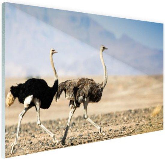 Twee rennende struisvogels Glas 90x60 cm - Foto print op Glas (Plexiglas wanddecoratie)
