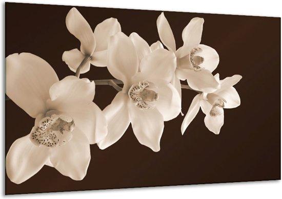 Glasschilderij Orchidee | Sepia, Bruin | 120x70cm 1Luik | Foto print op Glas |  F001888