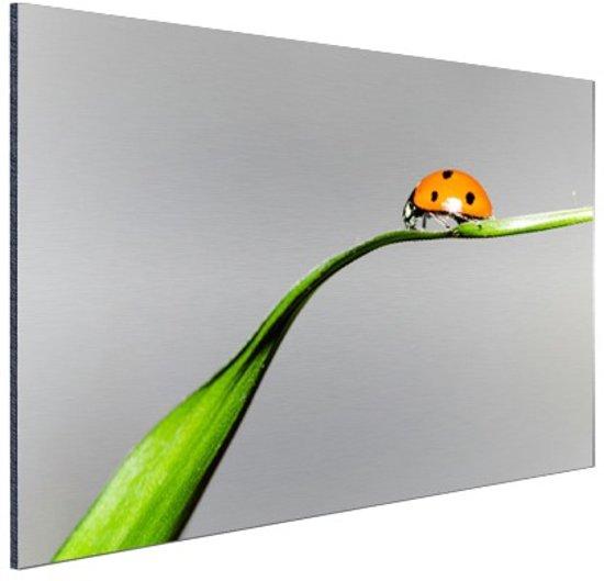 Lente lieveheersbeestje op gras Aluminium 120x80 cm - Foto print op Aluminium (metaal wanddecoratie)