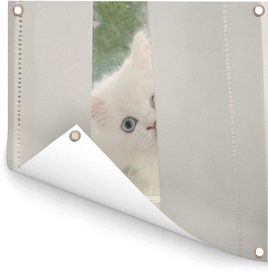 Witte Perzische kat met blauwe ogen kijkt door het gordijn Tuinposter 50x50 cm - klein - Tuindoek / Buitencanvas / Schilderijen voor buiten (tuin decoratie)