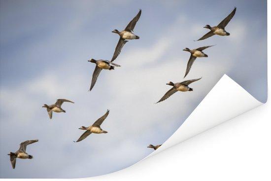 Zwerm smienten tonen de waanzinnige kleuren onder de vleugels Poster 30x20 cm - klein - Foto print op Poster (wanddecoratie woonkamer / slaapkamer)