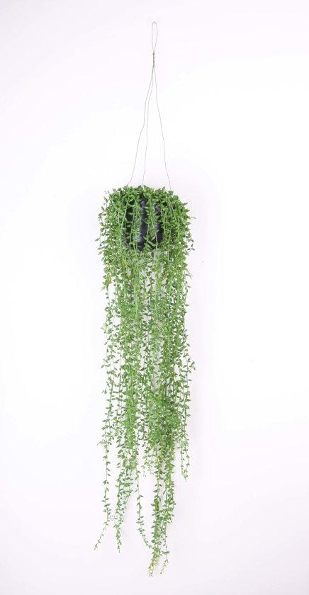 Emerald - Senecio hangplant - 70 cm - groen
