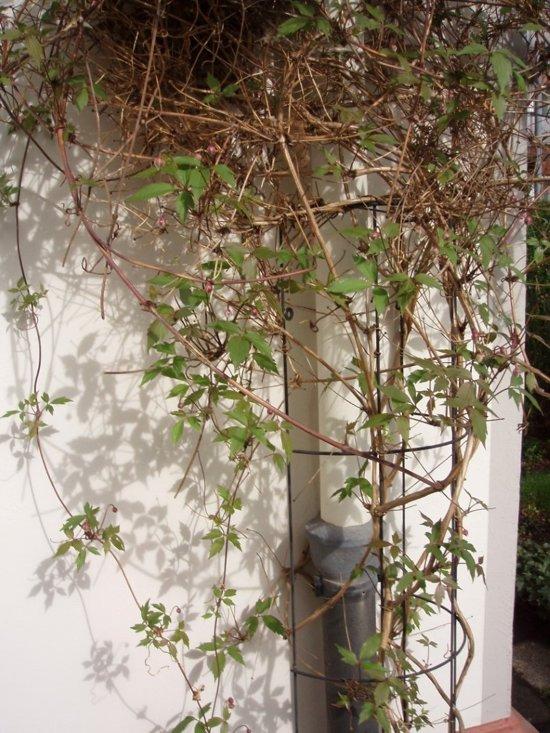 Klimrek Voor Planten.Bol Com Metalen Regenpijp Klimrek Geplastificeerd Groen H150x18cm
