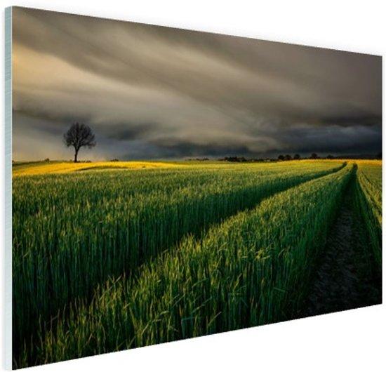 Natuurvelden in Europa Glas 90x60 cm - Foto print op Glas (Plexiglas wanddecoratie)