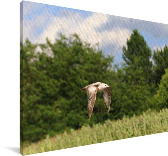 Ringsnavelmeeuw vliegt langs een bos Canvas 90x60 cm - Foto print op Canvas schilderij (Wanddecoratie woonkamer / slaapkamer)