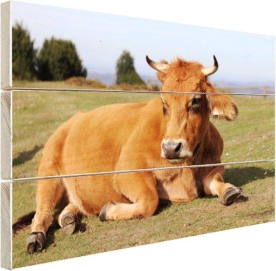 Rustende koe met horens Hout 120x80 cm - Foto print op Hout (Wanddecoratie)