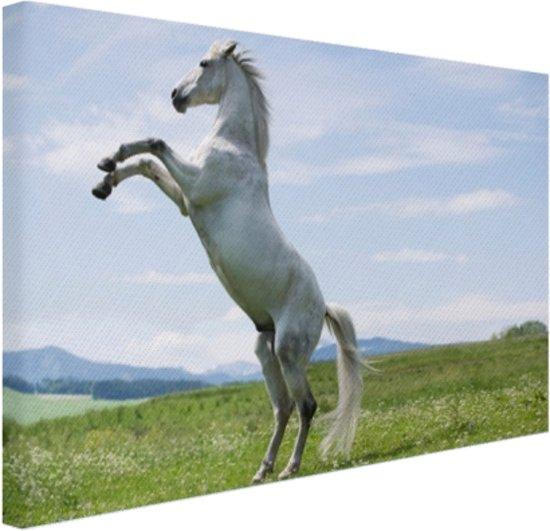 Wit paard steigert Canvas 120x80 cm - Foto print op Canvas schilderij (Wanddecoratie)