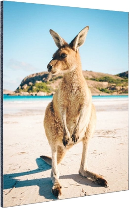Een kangoeroe op het strand Aluminium 20x30 cm - Foto print op Aluminium (metaal wanddecoratie)