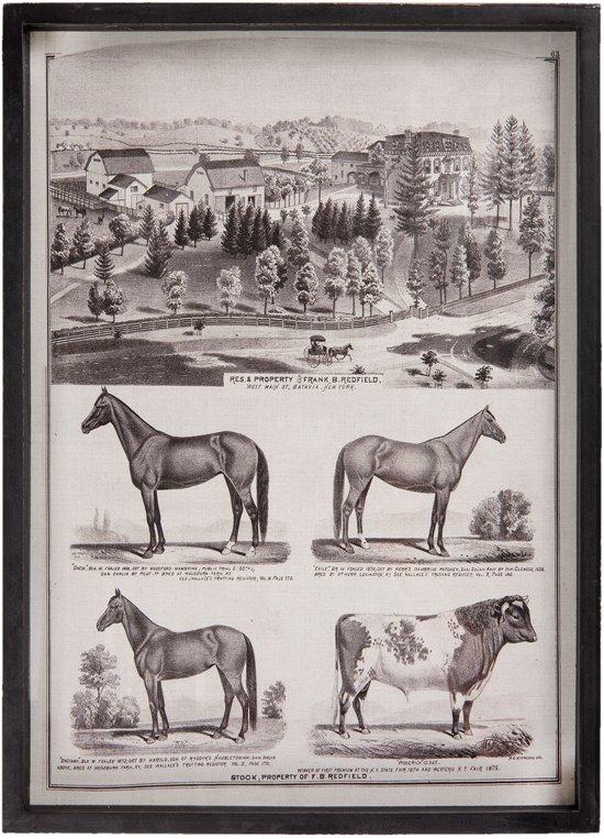 Schilderij dieren / boerderij 42*3*58 cm Zwart | 63838 | Clayre & Eef