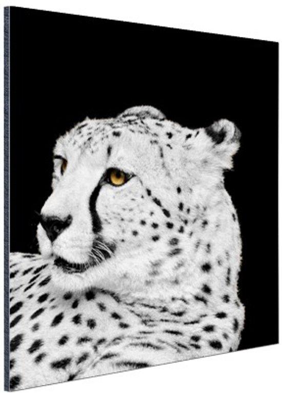 FotoCadeau.nl - Luipaard zwart-wit  Aluminium 60x90 cm - Foto print op Aluminium (metaal wanddecoratie)