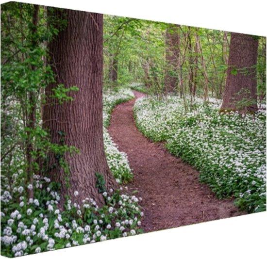 Pad in een bos met wilde knoflook Canvas 60x40 cm - Foto print op Canvas schilderij (Wanddecoratie)