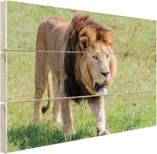 Lopende leeuw Hout 120x80 cm - Foto print op Hout (Wanddecoratie)