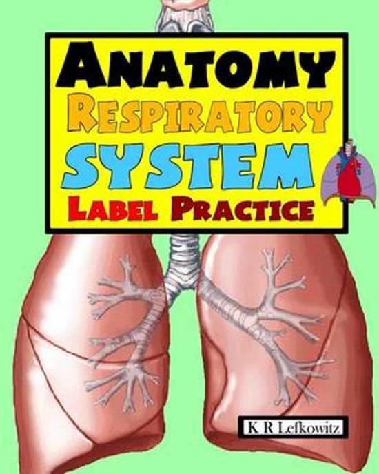 Bol Anatomy Respiratory System Label Practice K R Lefkowitz
