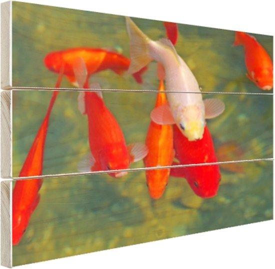 School met grote vissen Hout 60x40 cm - Foto print op Hout (Wanddecoratie)