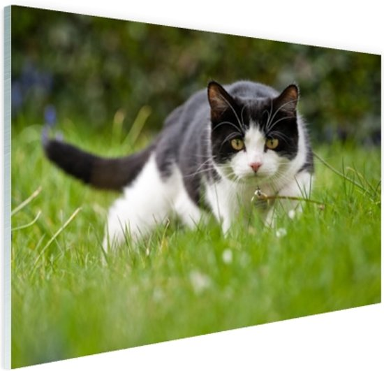 FotoCadeau.nl - Zwart-witte kat op jacht Glas 90x60 cm - Foto print op Glas (Plexiglas wanddecoratie)
