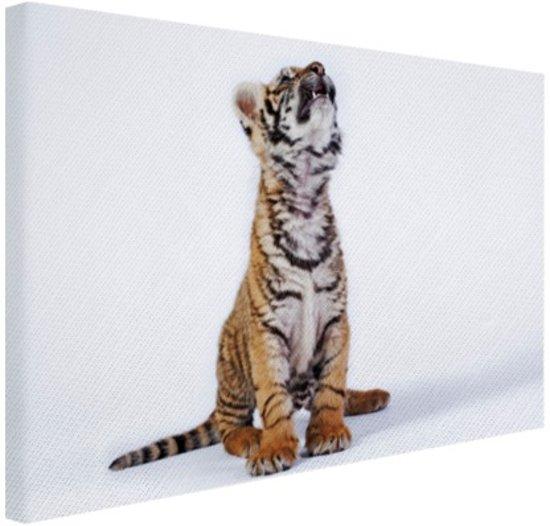 Omhoogkijkende tijgerwelp Canvas 60x40 cm - Foto print op Canvas schilderij (Wanddecoratie)