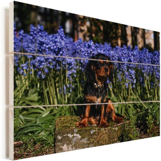 Een Cavalier King Charles-spaniël tussen de blauwe bloemen Vurenhout met planken 120x80 cm - Foto print op Hout (Wanddecoratie)