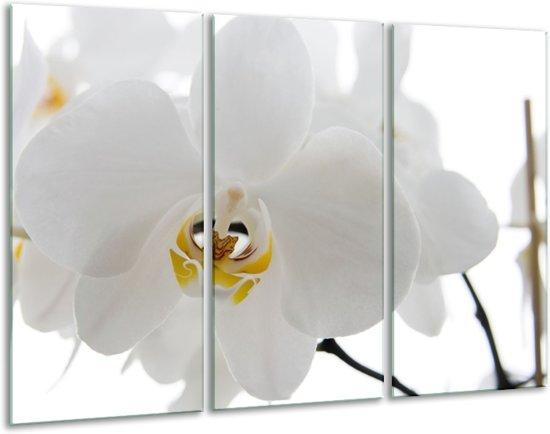 Glas schilderij Orchidee, Bloemen | Wit, Geel | 120x80cm 3Luik | Foto print op Glas |  F007450