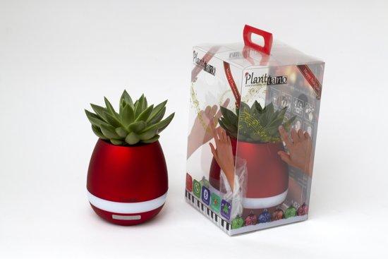 Plantiano Kerst editie Rood met Echeveria